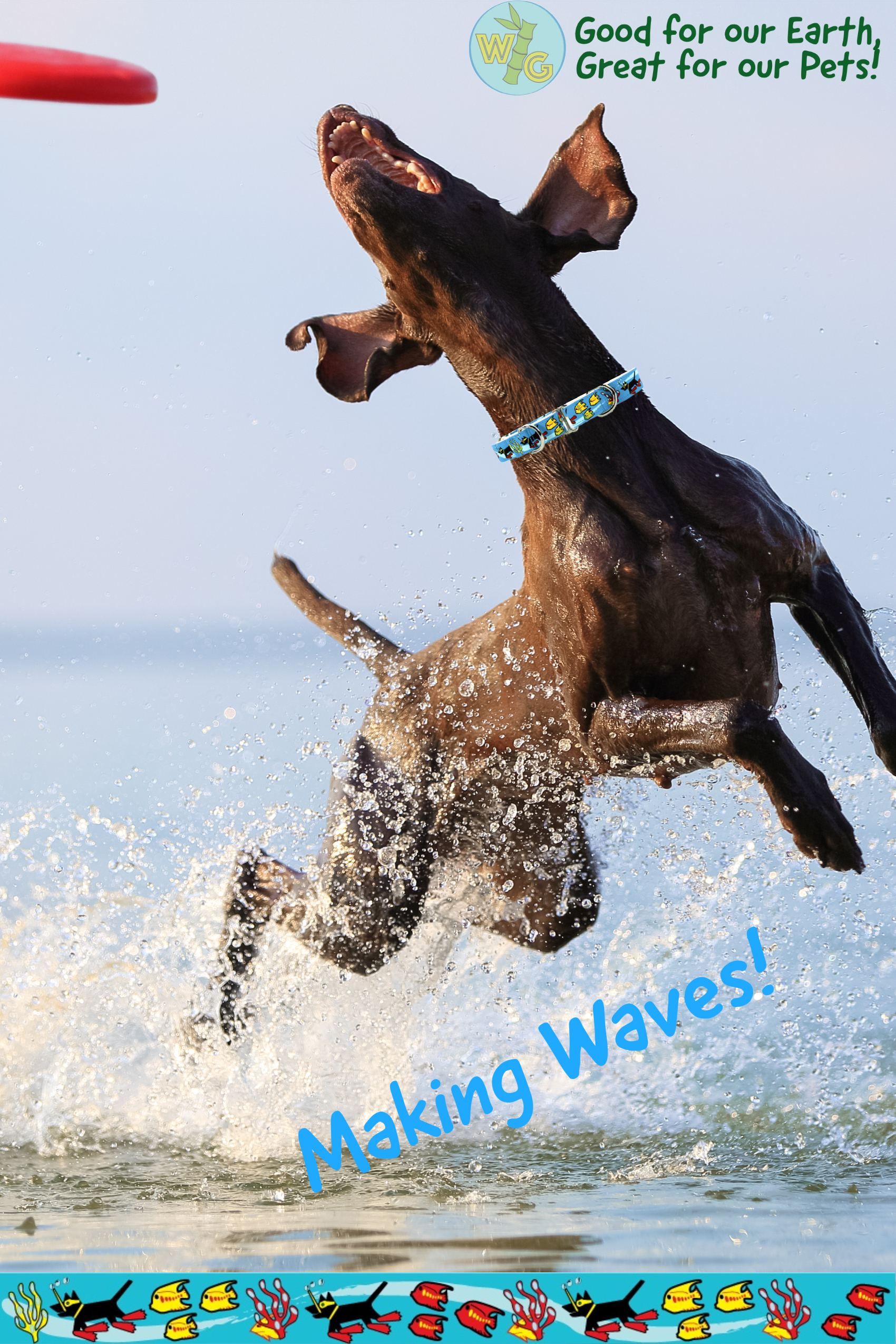 Dog in ocean jumping to catch red frisbee while wearing a Making Waves dog collar